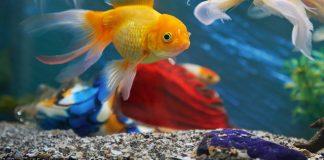 best aquarium substrate