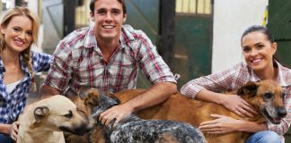 best dog breeds for college students