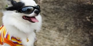 best dog sunglasses and goggles