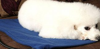 best heated dog pads