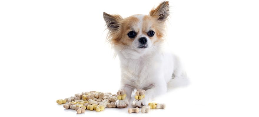 canidae canine food