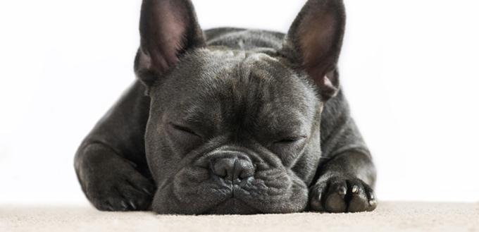 canine runs in their sleep
