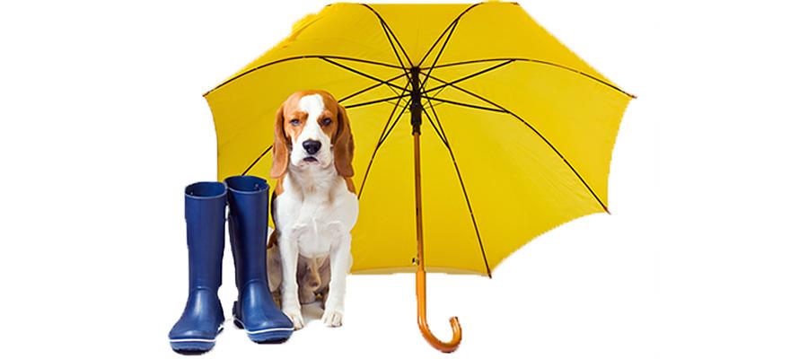 canine umbrellas