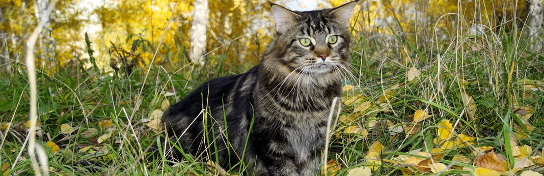 cat asthma symptoms and treatment
