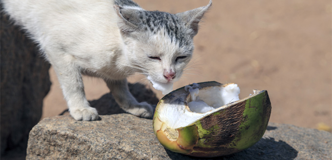 cat eating fruits