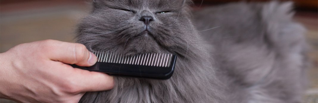 cat grooming everything you need to know