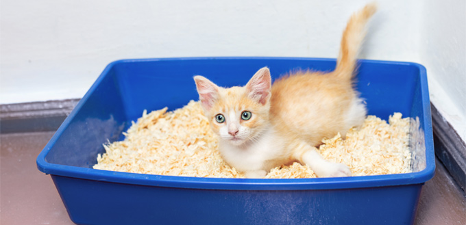 cat laying in their litter