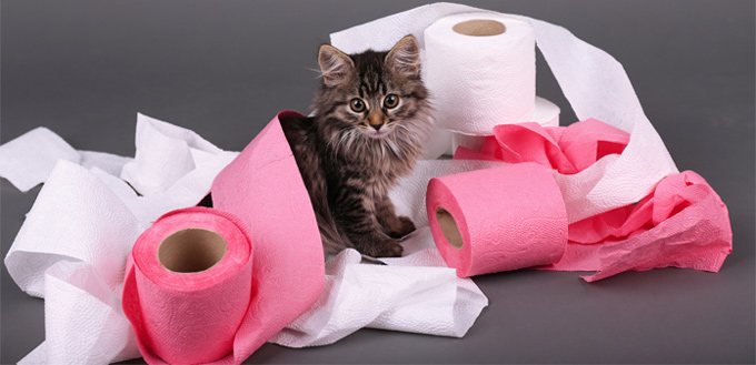 cat playing with a toilette paper