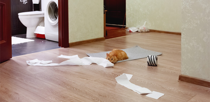 cat playing with the paper