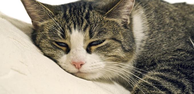 cat sick with diarrhea