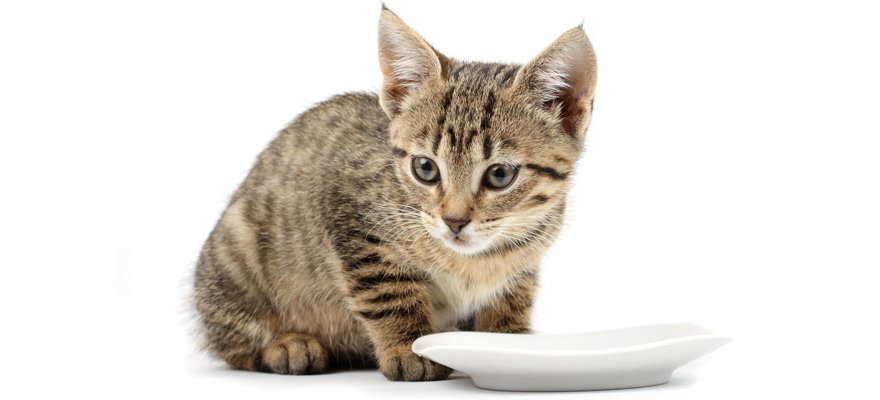 cat's food for indoor cats
