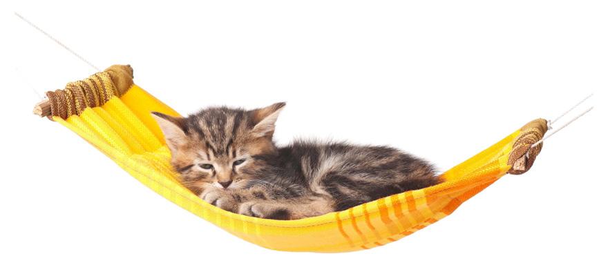 cat's hammock