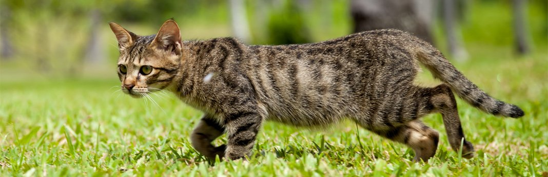 causes-of-unexplained-weight-loss-in-cats