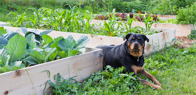 celery veggies for dogs