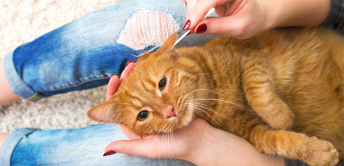 How To Clean Your Cats Ears Properly