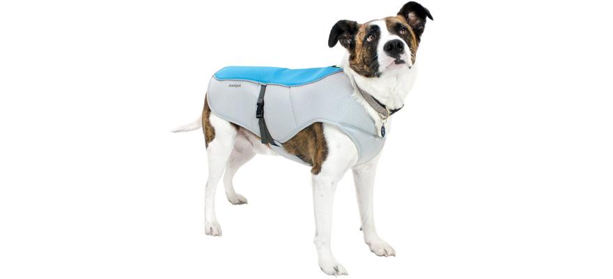 cooling vest for dog