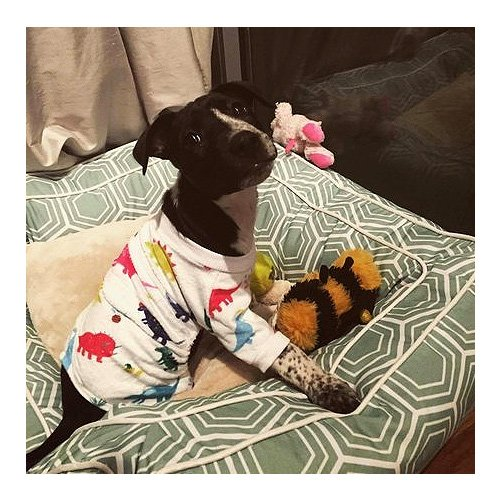 CuteBone Dinosaur Dog Pajamas