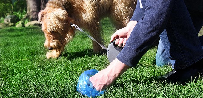 dog eating its own poop