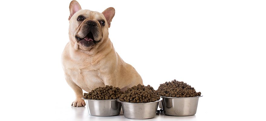 Best Dog Food For French Bulldogs Review Buying Guide In 2019