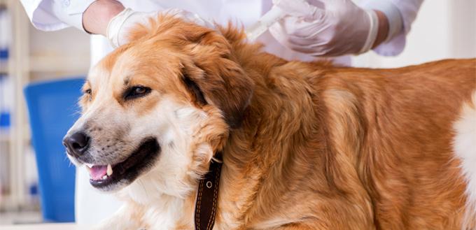 dog health issue