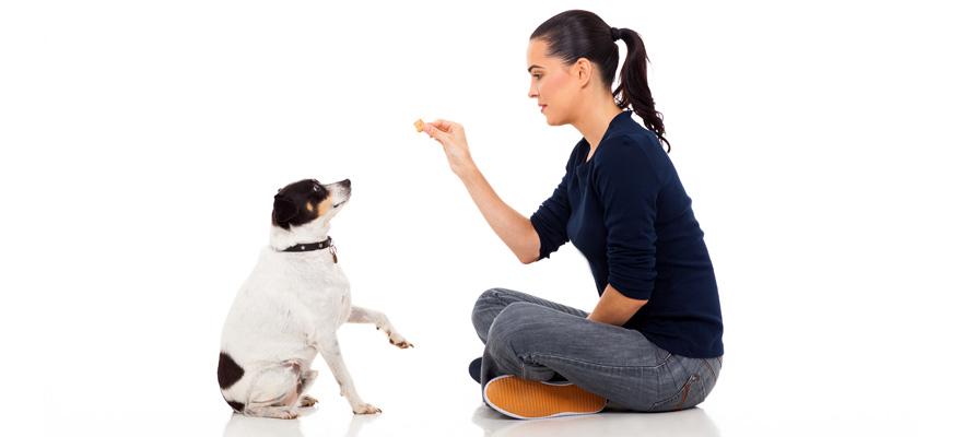 feeding dog with purina pro dog food
