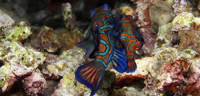Unisexual species of fish