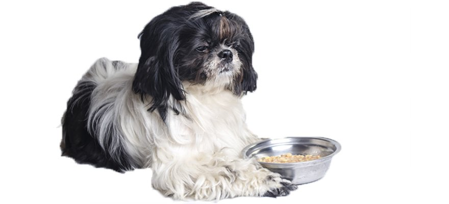 food for shih-tzu dogs
