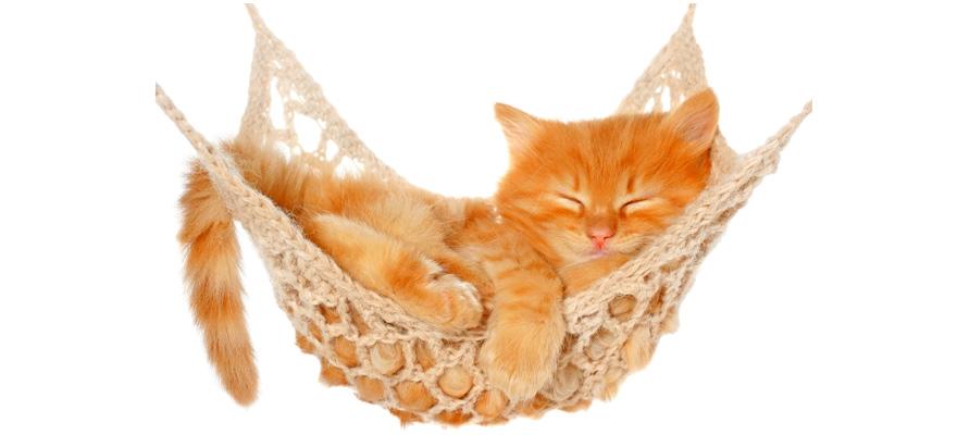 hammock for cats