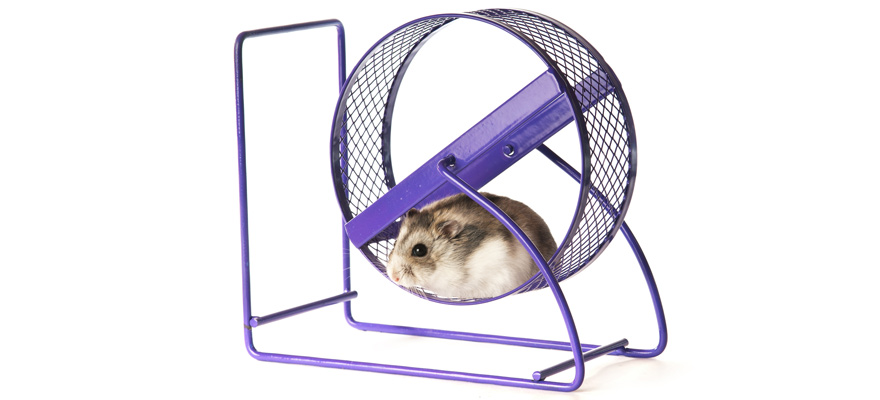 hamster wheel toy