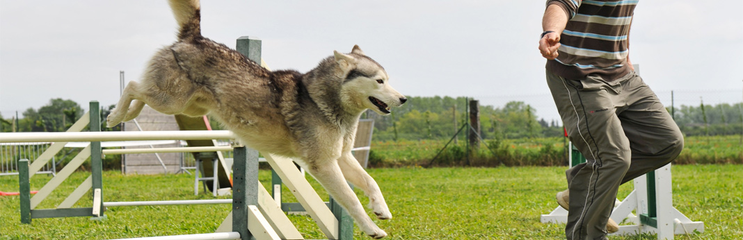how much exercise does a dog need everyday
