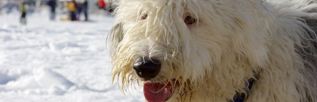 how-to-cut-matted-dog-hair