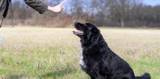how to teach a dog to sit in a few easy steps