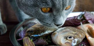 human foods cats can eat