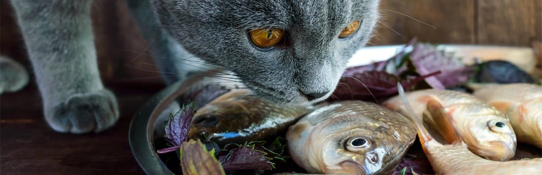 human-foods-cats-can-eat