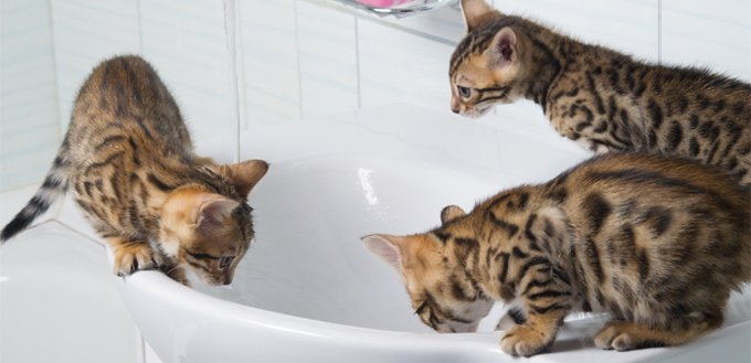 kitties playing in a tub