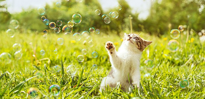 kitty playing with bubbles