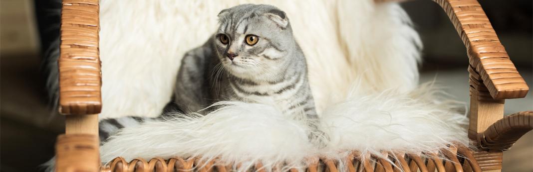 lyme-disease-in-cats