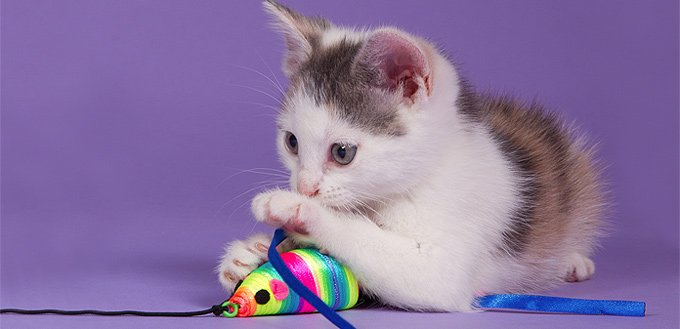 optional costs of owning a cat