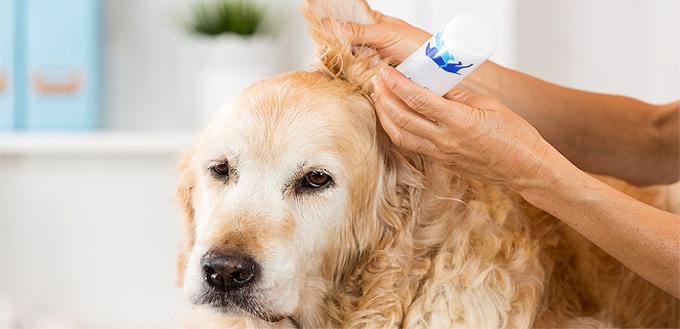 Otomax for Dogs:用途和副作用指南