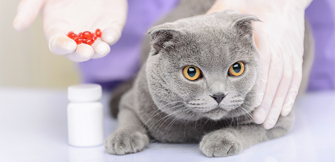 pills for cats