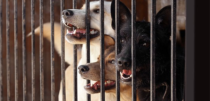 shelter dogs behavior