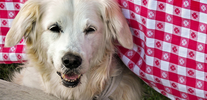teeth chattering in dogs
