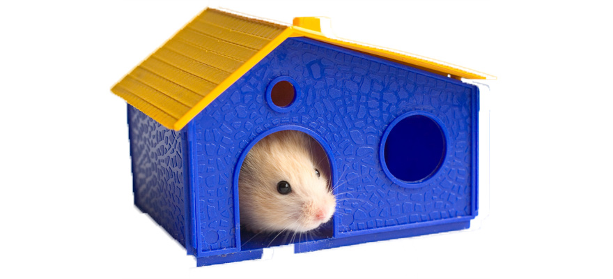 toys for hamsters