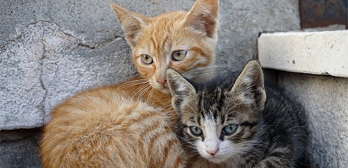 two cats together