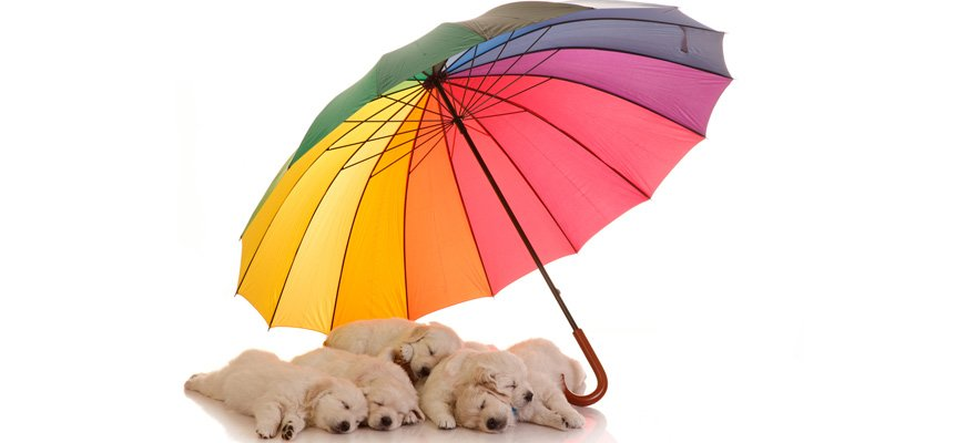 umbrellas for dogs