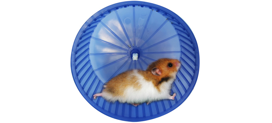 wheel for hamsters
