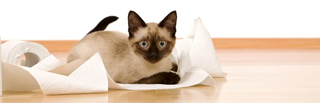 why do cats like to play with toilet paper