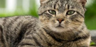 why do cats purr - reasons will surprise you