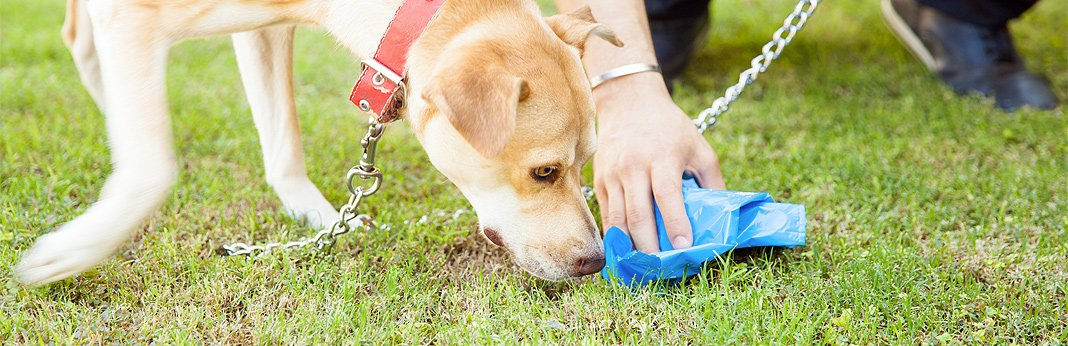 why-do-dogs-eat-poop—how-to-stop-it