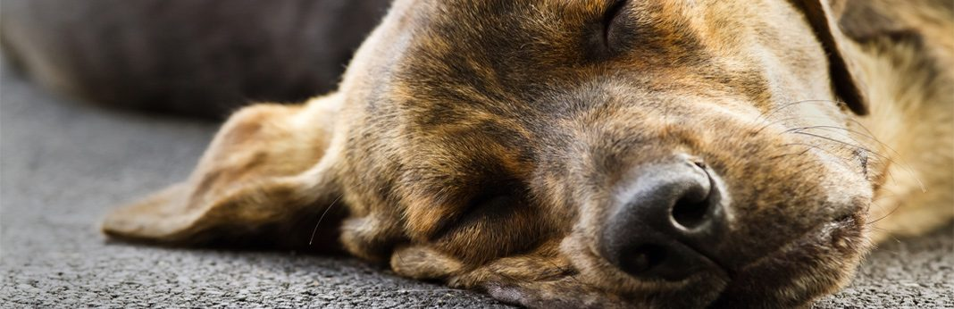 why do dogs snore - reasons behind it